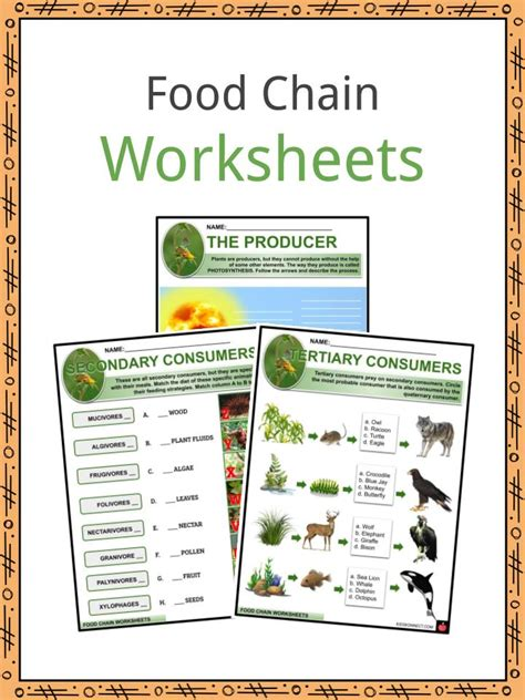 food chain facts worksheets tale  survival  kids