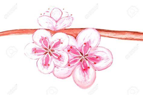 Dessin Fleur De Sakura  Du Japon Et Des Fleurs