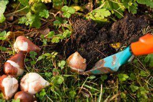 Garten Herbst Aufgaben by Vorbereitungen F 252 R Den Herbstanfang