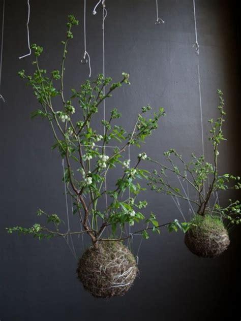 pflanzen zum aufhängen dekoration zum aufh 228 ngen selber machen ideen gartengestaltung bonsai pflanzen h 228 ngende