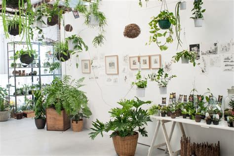plant store the planthunter the botanical road trip loose leaf store