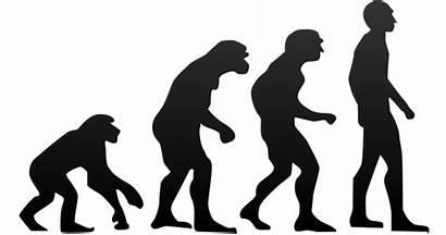 Evolution Human Google Svg Plus Theory Wikimedia