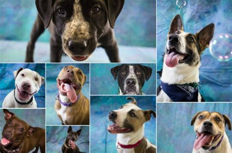 humboldt county animal shelter pooches  ready