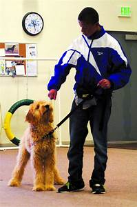 fairbanks kids help train future service dogs local news With local dog training classes