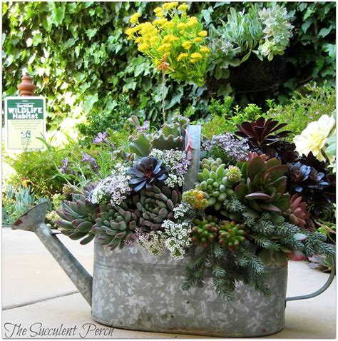 watering succulents wishing for watering cans a gallery flea market gardening