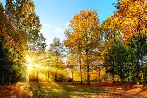 Livingwalls Photo wallpaper «Autumn Forest 1» 470645