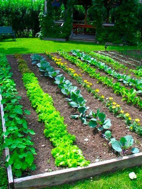 raised vegetable garden ideas  designs
