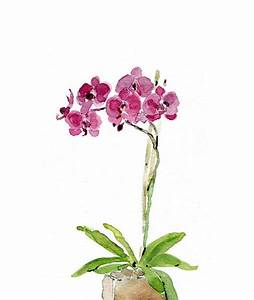 Orchid plant art print ,orchid watercolor print, Orchid ...