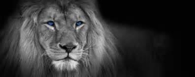 sprüche schwarz weiß königlich und anmutig löwe panorama