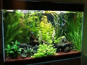 360 Liter Aquarium : aquarium 130 litres type amazonien par djoudjou ~ Sanjose-hotels-ca.com Haus und Dekorationen