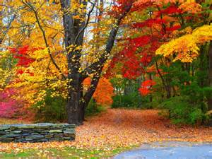 Colourful Autumn Background by Nature Wallpaper Of Colorful Autumn Forest In High