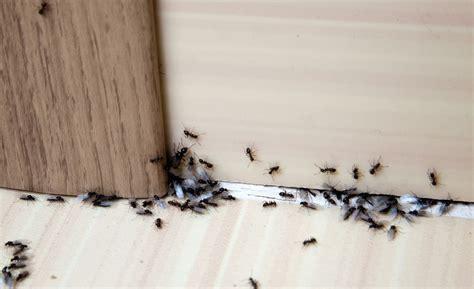 ant exterminator  houston tx    hartz pest