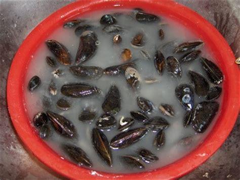 comment cuisiner les moules comment laver les moules