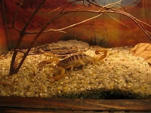 Was Muss Ich Bei Einem Hauskauf Beachten : skorpione was muss man bei einem kauf beachten ~ Markanthonyermac.com Haus und Dekorationen
