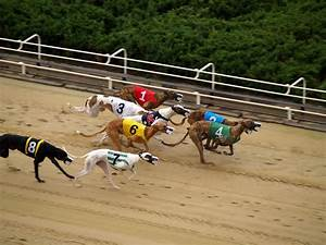 1000+ images about GreyHound on Pinterest