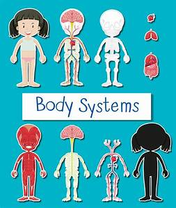 Diagram Showing Different Body Systems Of Human Girl