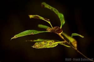 Die Farben Des Herbstes : frank butenhoff fotoblog farben des herbstes 3 ~ Lizthompson.info Haus und Dekorationen