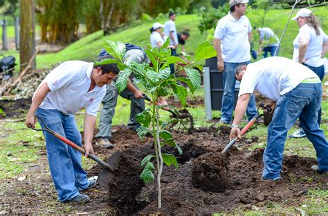 how to plant trees environmental hero reforestation caign aims to restore biological corridors in costa rica