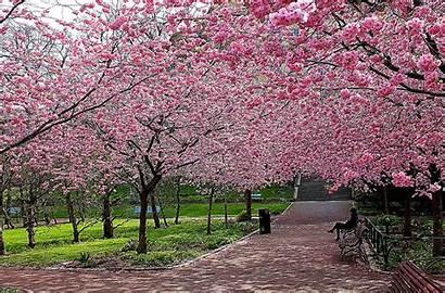 Screensavers Spring Season Screen Seasons Wallpapersafari Wallpapers