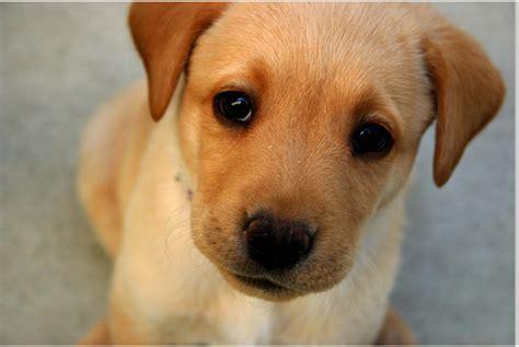 Cute Baby Dog Wallpaper Wallpapersafari