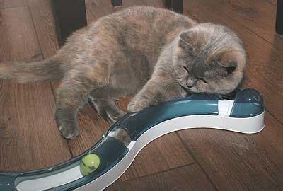 jeux pour chat maison play store jeux gratuits telecharger jeux tennis gratuit 3d jouer a des jeux de char