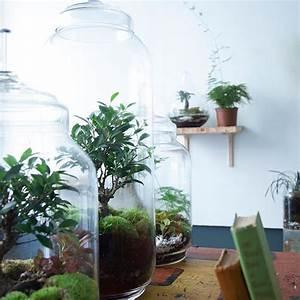 Acheter Terrarium Plante : acheter terrarium plante ~ Teatrodelosmanantiales.com Idées de Décoration