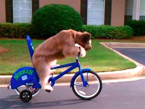 It's a way for you to decorate your town or encourage certain insects to spawn. Norman The Dog Rides a Bike - You Have Been Warned - YouTube