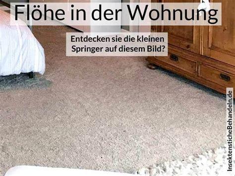 Wohnung Deutschlandsberg Mieten Privat by Floh Im Haus Krefeld Entdecken Krefeld Haus Floh Haus