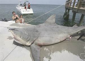 Total Pro Sports 9 Biggest Sharks Ever Caught