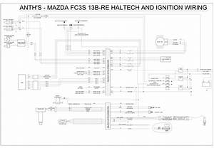 Haltech Wiring Diagram