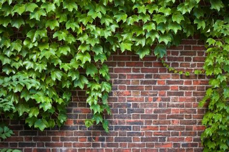 How To Train Climbing Vines Gardenscom