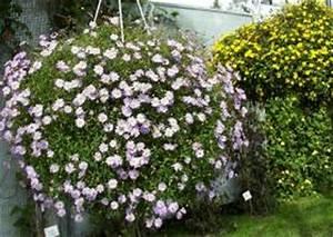 Hängende Pflanzen Für Draußen : die begonie eine universelle balkonblume sommerblume ~ Sanjose-hotels-ca.com Haus und Dekorationen