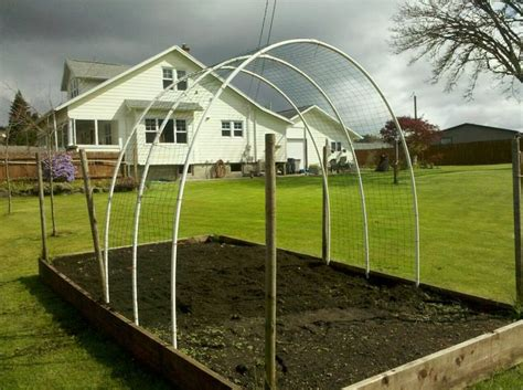 Vinyl Coated Hog Wire And Pvc Pipe Make A Trellis For Any