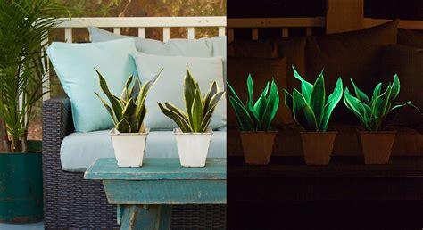 Glowee Glowinthedark Houseplant Pegplant