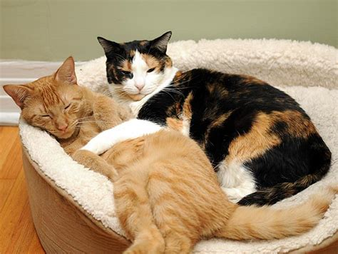 the top cats for with allergies petfinder