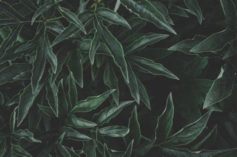 beautiful dark green  pexels  stock