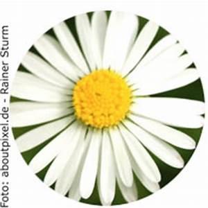 Blumen Bedeutung Hochzeit : welche blumen bei der hochzeit die farben sorten und ~ Articles-book.com Haus und Dekorationen