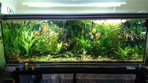 fournitures de bureau professionnel troc echange aquarium eau douce 850 litres sur troc com