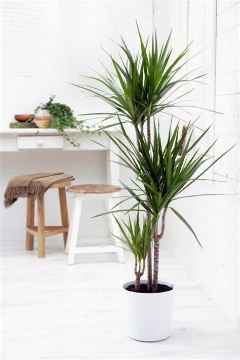 home interior plants indoor palm images which are the typical types of palm trees interior design ideas avso org