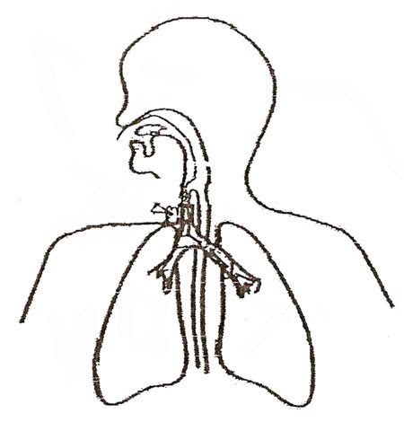 respiratory system blank diagram   clip