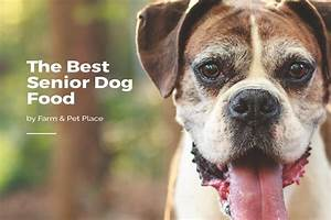 best senior dog food top rated dog food for older dogs With best senior dog food