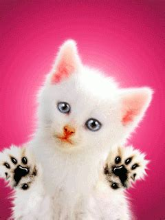 Animated Cat Wallpaper Free - cat animated hd mobile wallpapers free