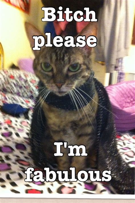 Bitch Im Fabulous Meme - 32 best fabulous images on pinterest funny things funny animal and funny animals