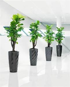Pflegeleichte Zimmerpflanzen Mit Blüten : robuste zimmerpflanzen beliebte pflegeleichte topfpflanzen ~ Sanjose-hotels-ca.com Haus und Dekorationen