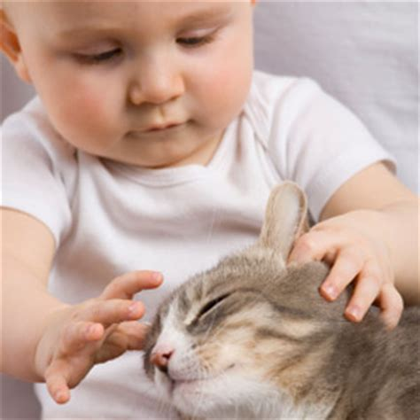 Exclusively Cats Veterinary Hospital Blog Hello, Baby
