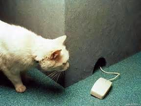 cat and mouse animal humor images cat and mouse wallpaper photos