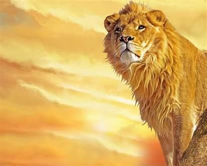 Wallpapers Lions Lion King Desktop Animals 3d