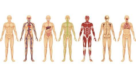 191 cu 225 les los sistemas y aparatos cuerpo humano
