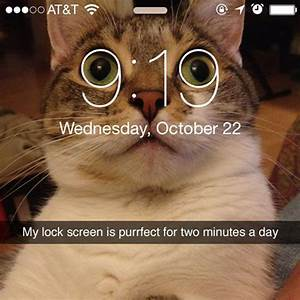 This Cat Screen Saver Is Perfect For Just Two Minutes