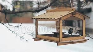 Graines De Tournesol Pour Oiseaux : les oiseaux ont vol au conducteur pour des graines de ~ Farleysfitness.com Idées de Décoration
